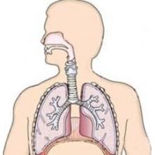 (Ceftézole Sodium) - Infection rénale Ceftézole Sodium