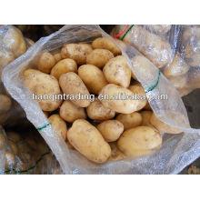 Frische lange Form Kartoffel