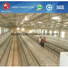 Factory Outlet ein Typ Schicht Hühnerkäfig