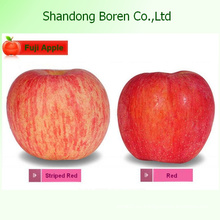 2015 Китайский свежие фрукты FUJI Apple