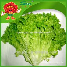 Hortalizas frescas hojas verdes lechuga verduras orgánicas