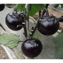 Konzi HE07 круглые черные гибридные семена баклажан