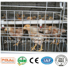 Young Chick Cage for Raising 1-14 Week Chicks