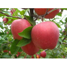 Pome Fruit Red Farbe roter Stern Apfel