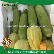 Suntoday vegetal asiático NÃO GMO híbrido F1 abóbora verde luz orgânica Kabocha sementes de abóbora japonesa (17011)