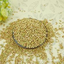 trigo mourisco amargo preto da venda quente de alta qualidade para o chá (Fagopyrum esculentum)