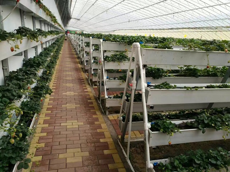 Strawberry Grow Systems 2