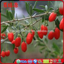 Goji orgánico Goji Bayas Goji de alta calidad mantener una figura delgada
