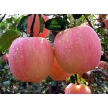 High Quality Delicious Fresh FUJI Apple