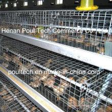 Pullet Chicken Cage Chick Brutkäfig