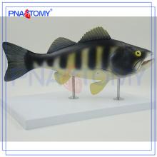 PNT-0822 Modèle anatomique du poisson, modèle de dissection du poisson