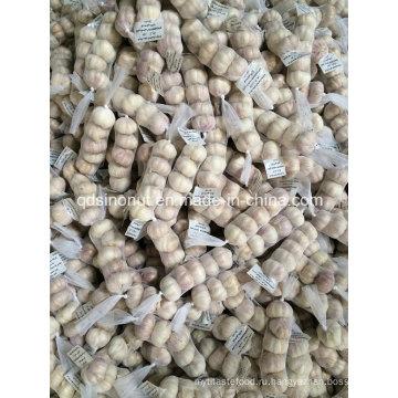 Иорданский рынок чеснока 5p 200g