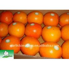 Frische Nabel Orange in Karton