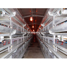 the average breeding chickens of battery cage for layers
