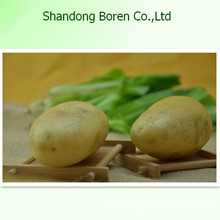High Quality Fresh Potato From Shandong Boren