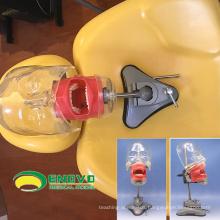 SELL 12559 Sucker Type Phantom Medical Science Educational Dental Teaching