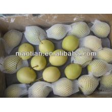 Fresh Shandong Pear New Season Crop