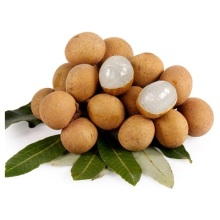 Kinesisk Fresh Longan Fruit
