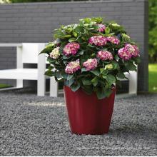 (BC-F1032) Модный дизайн Пластиковый самоосушающийся цветочный горшок
