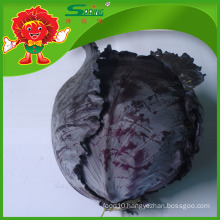 high quality fresh cabbage/wholesale cabbage