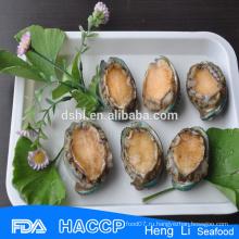 Высокое качество fujian морское ушко для продажи