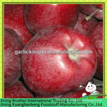 China fábrica de maçã vermelha huaniu