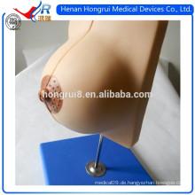 Medizinische Brust Anatomie Modell