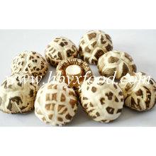 4-5cm Top Quality Dried White Flower Shiitake Mushroom