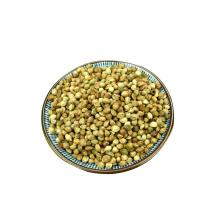 Primeiras sementes de cânhamo de qualidade para humanos