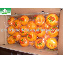 Venda big mandarin orange Brother Kingdom
