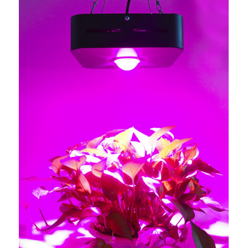 cob led grow journal 200w luces de cultivo
