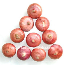 Low price chinese Fresh Red Onion