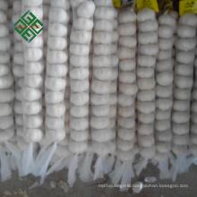2017 fresh style pure white garlic