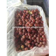 Fábrica de uvas / uvas vermelhas / melhores uvas vermelhas frescas