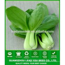 NPK03 Yuhua Beste hohe Ausbeute Pak Choi Samen zum Pflanzen