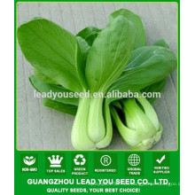 NPK03 Yuhua Mejores semillas de pak choi de alto rendimiento para plantar