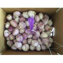 Fournissez l'ail blanc normal de 4.5-5.0 Cm dans 10kg / carton