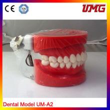Modelo de Dentición Estándar Removible