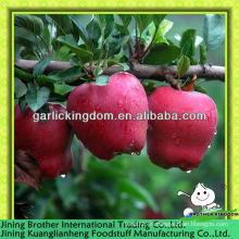 China por mayor huaniu manzana