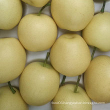 Export Standard Quality of Fresh Golden Pear