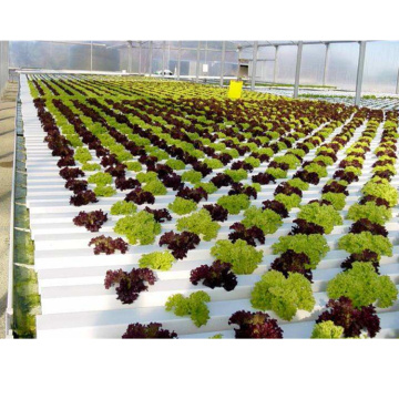 Agricultural Greenhouse Flat Hydroponic commercial hydroponic