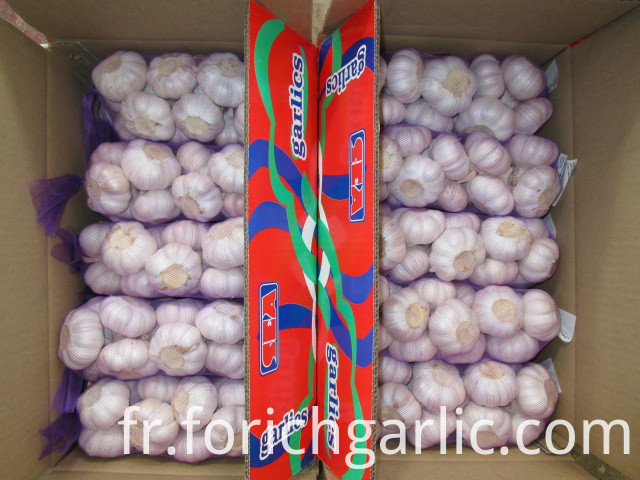 New Crop Fresh Season Garlic
