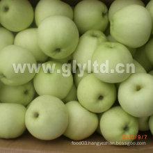 New Crop Fresh Golden Apple Grade a and B
