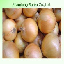 Chinese Fresh Good Quality Yellow Onion