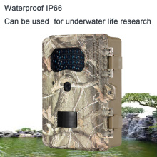 Underwater Plant Research Trail Camera