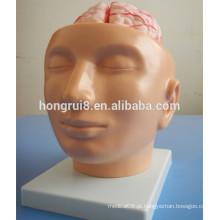 Cérebro humano ISO com artérias no modelo de cabeça, modelo de anatomia cerebral