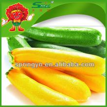 2015 Calabacín de color para la venta de verduras frescas orgánicas