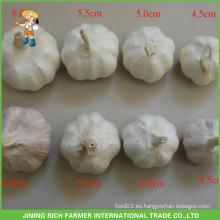 Venta al por mayor china fresca Ajo blanco 4.5CM 5.0CM 5.5CM 6.0CM Bolsa de malla en cartón 10KG Precio Bueno