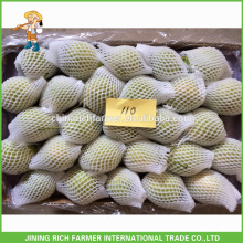 Super Quality Fresh Shandong Pear