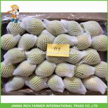 Pera de Shandong fresca da qualidade super